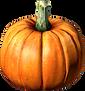 Pumpkin.png