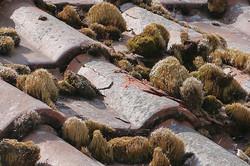 Mousses sur toiture