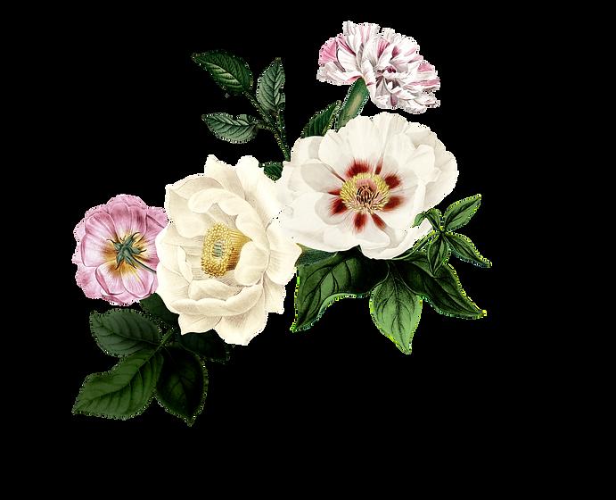 Bloom04.png