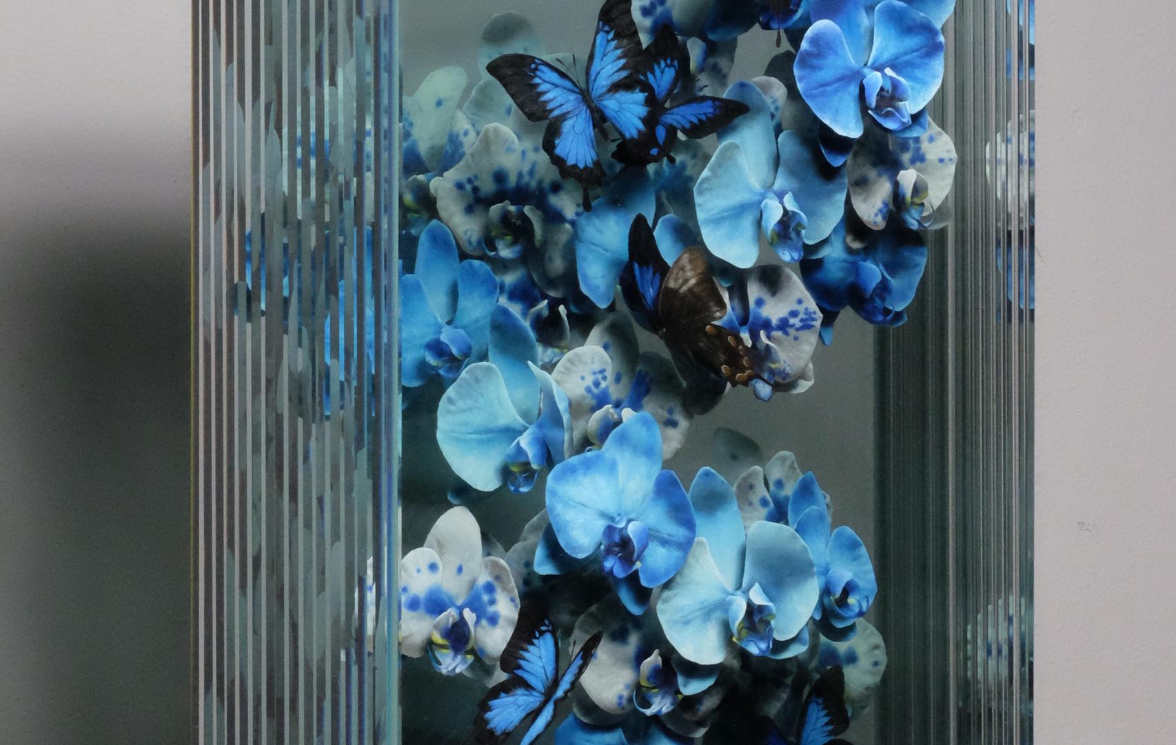 Under Wings of Blue (Side View).JPG