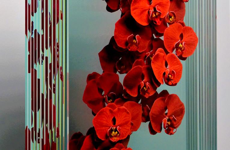 Phalaenopsis in Red (Side View).JPG