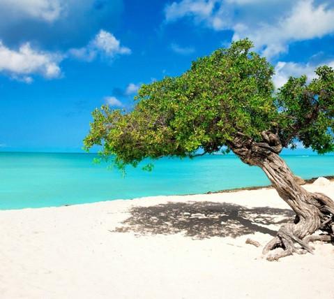 Eagle Beach Aruba.jpeg