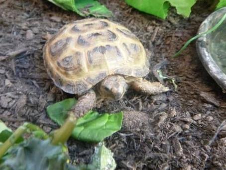 New School Tortoise!