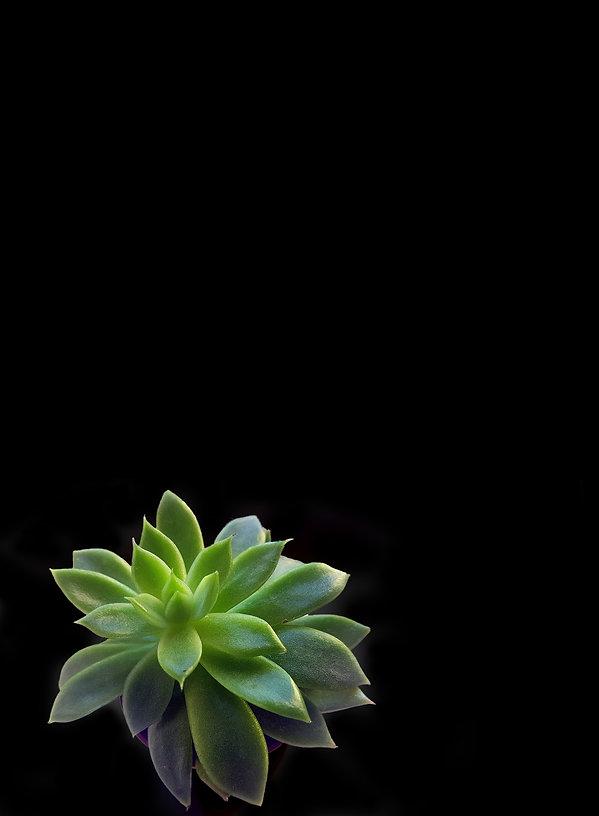 beautiful-botanical-black_edited.jpg
