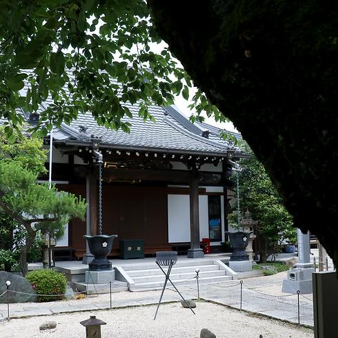 Sakura_Hondou.png
