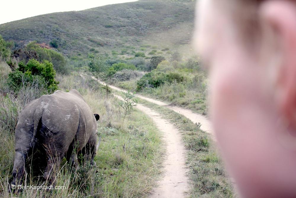 Nashorn auf Safari gesichtet
