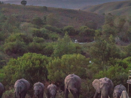 Safari an der Garden Route