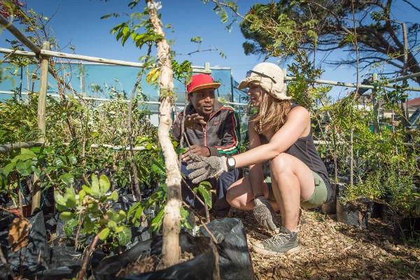 Verbinde deine Reise mit einem Projekt. Vielleicht pflanzt du Bäume?