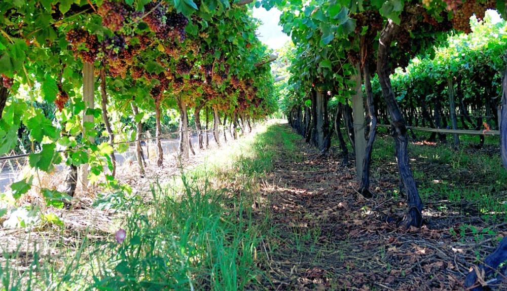 Mymering Farm im Dwarsrivier Tal. Foto: Mymering Wines