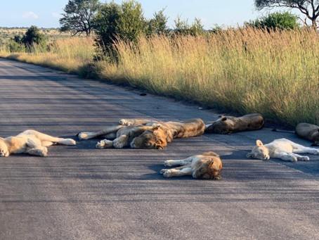 Earth Day: Die Pandemie hat uns Menschen lahmgelegt und Tiere erobern sich die Natur