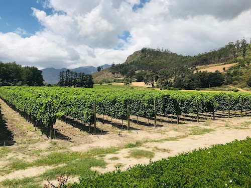 Beside kleine Weinfarmen und entdecke Südafrika ganz individuell
