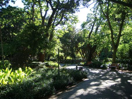 Der Company's Garden ist die grüne Oase Kapstadts
