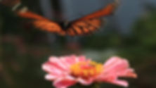 nelson-womens-angel-fund-video.jpg