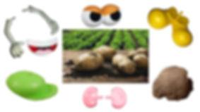 Potato-parts-collage-(Web).jpg