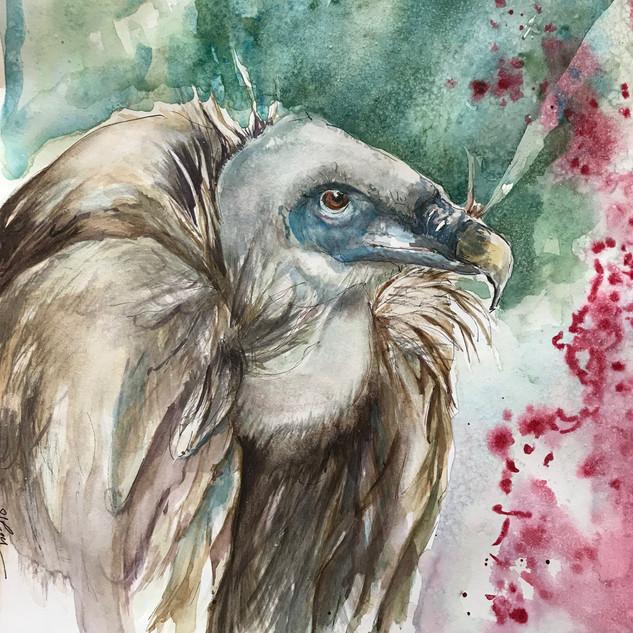 Griffin Vulture