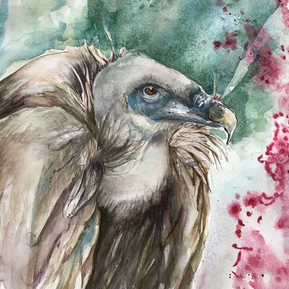 Griffin Vulture -Water Colour