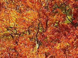 forest-63279__340.jpg