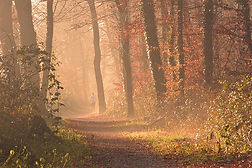 fog-1856722__340.jpg