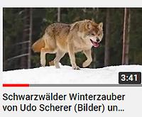 Winterauner.PNG