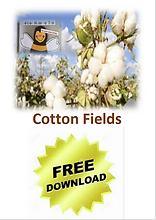 Bild Cotton.png
