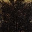 34X28 (2)arbre nocturne.JPG