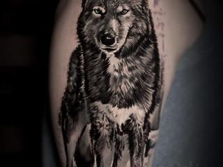 tomas wolf.jpg