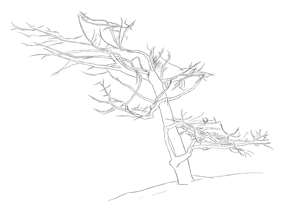 Pine_PNG.PNG