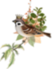 crowned-bird_0009_9.png