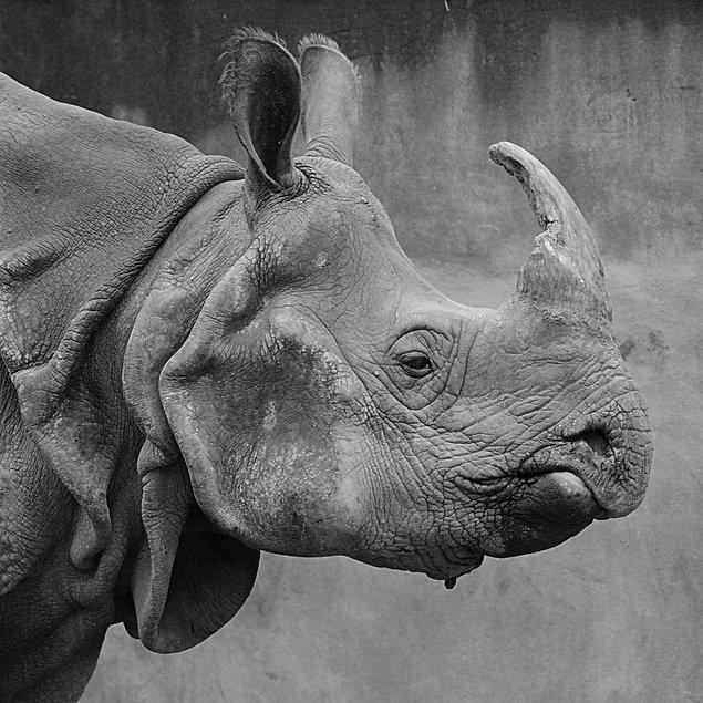 rhino-1118683_1280.jpg