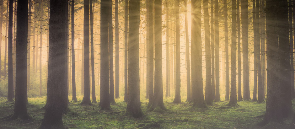 Forest Bathing: Just another fancy name for walking slowly in the woods?