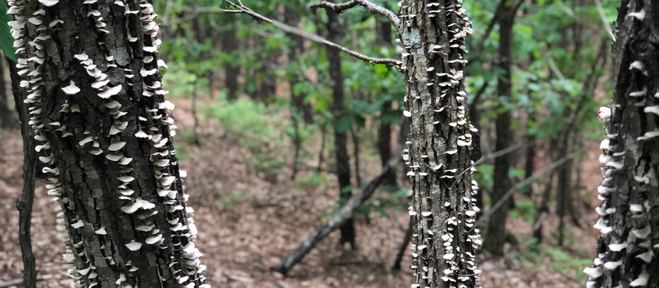 Public Hearing on Nature Retreat: Thursday, June 6th
