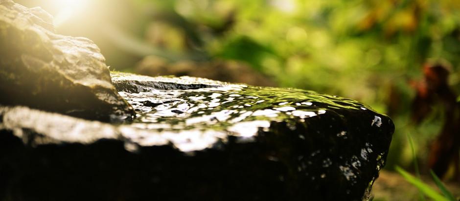 Wellness and Nature Resort Gaining Momentum….