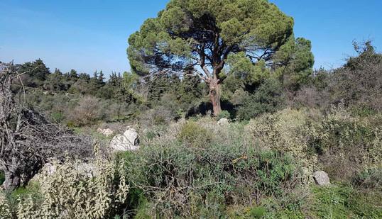 Interior views - A pine tree.jpg