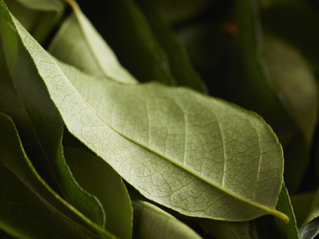 Masala aka Curry Leaf