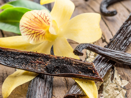 Vanilla - The Only Edible Fruit in the Orchid Family
