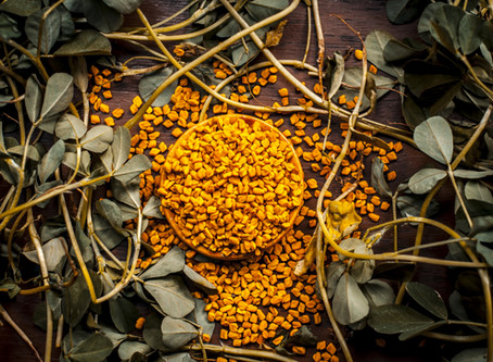 Fenugreek - The Ancient Spice of Mummification