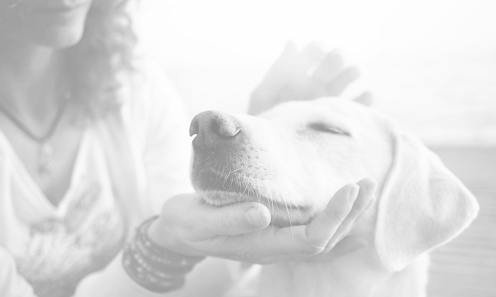 closeup-of-dogs-face-caressed-by-woman.j