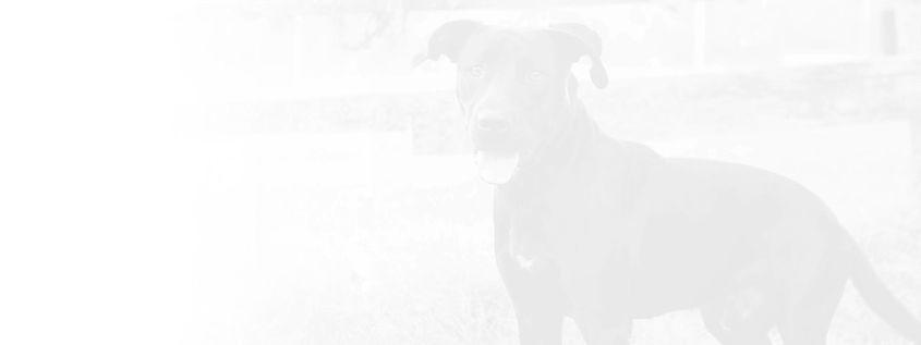 RARE+Pet+Adoption+Dogs+for+adoption+nash