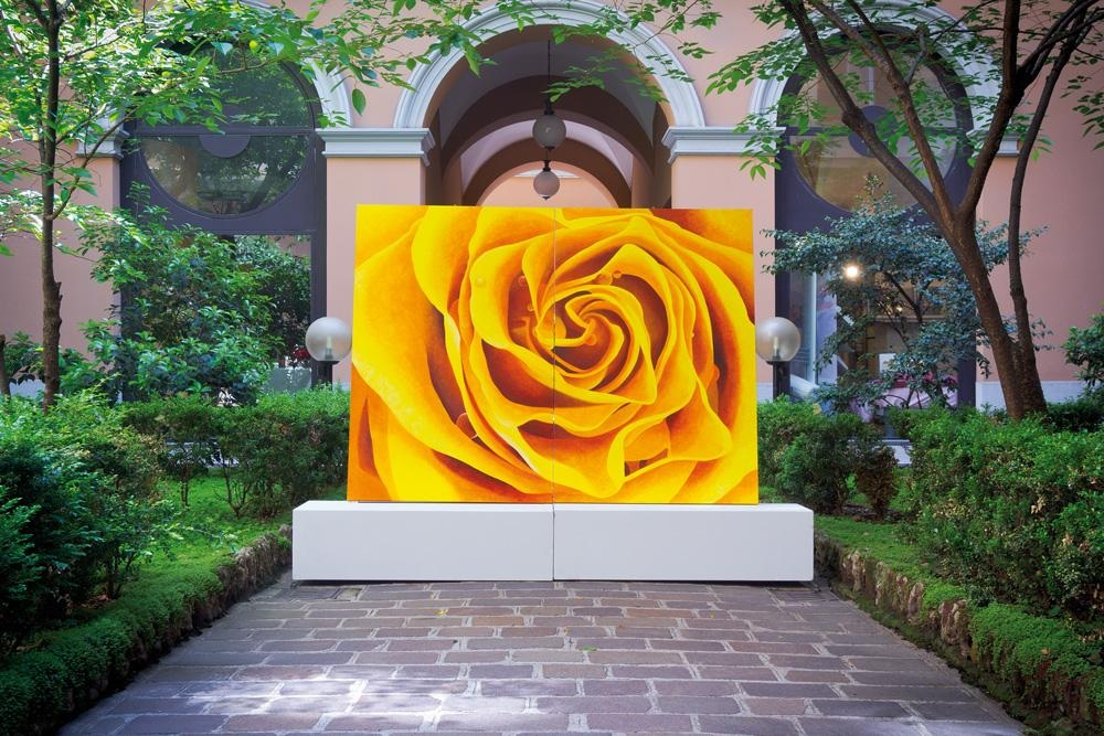 Sun Rose