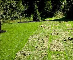 lawn-dethatching.jpg