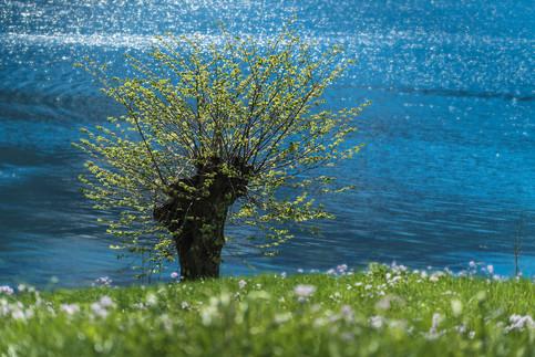 Nina's Langfoss Tree.jpg