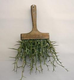 thorn brush