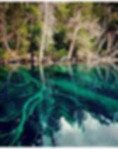 bosque sumergido 2.jpg