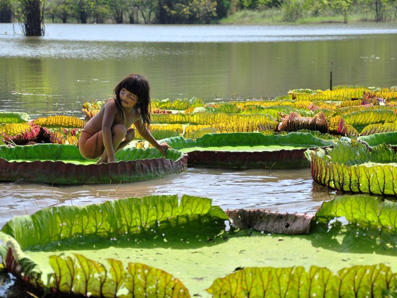 Victoria Regia Amazonas