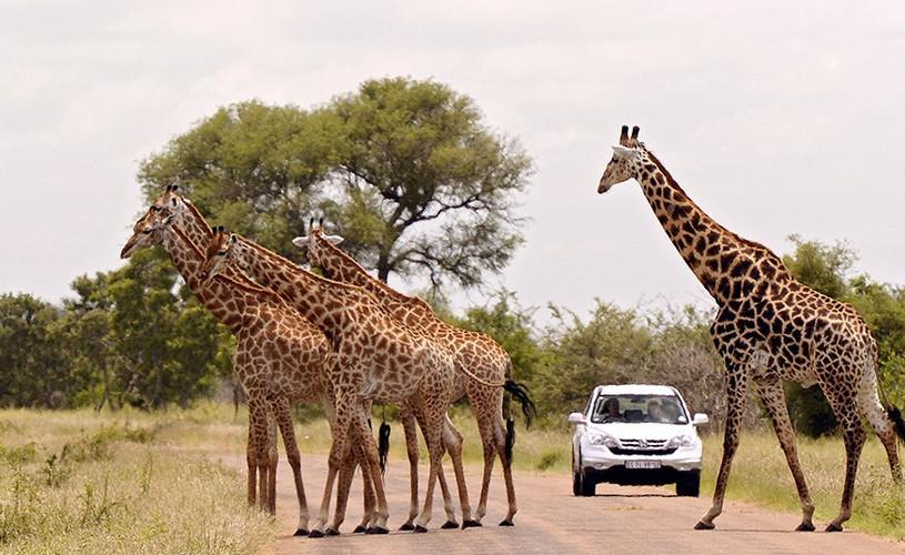 Safari en Parque Kruger