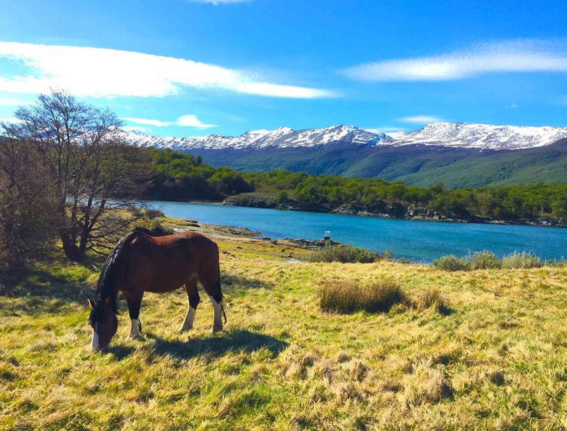 PN Tierra del Fuego.jpg