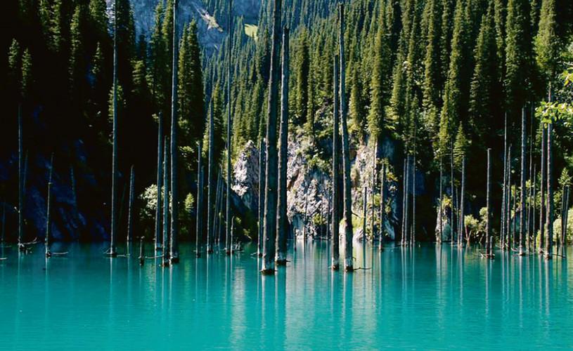 bosque sumergido 3.jpg