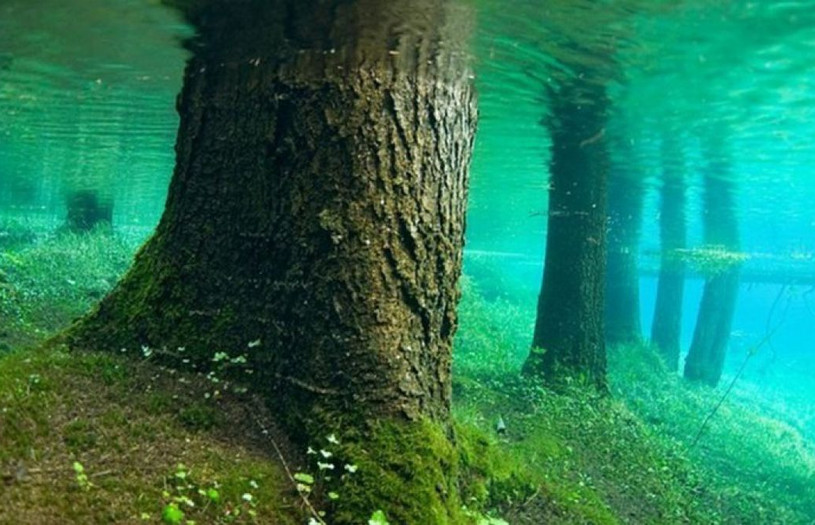 bosque sumergido.jpg