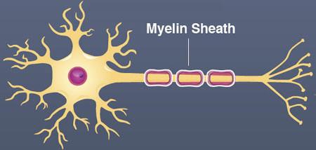 Understanding ways to promote healing in MS