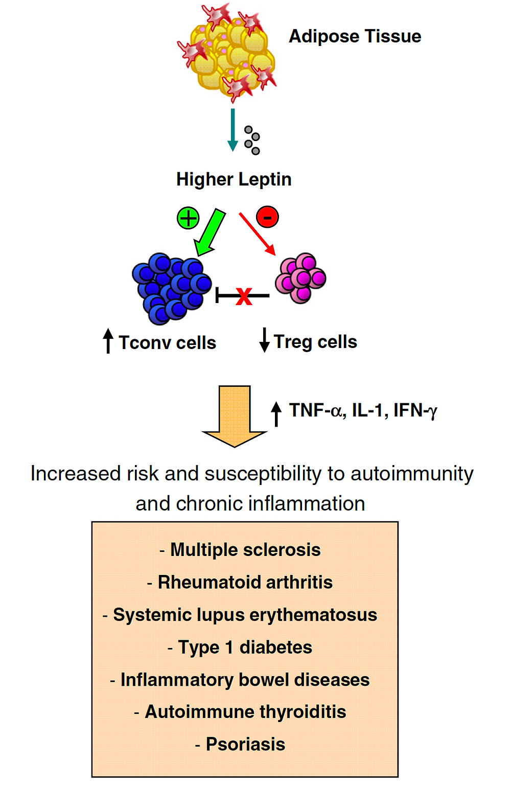 Leptin, obesity, multiple sclerosis, susceptibility to MS,